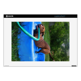 "Chocolate Lab Pit Puppy in Wading Pool 2 15"" Laptop Decals"