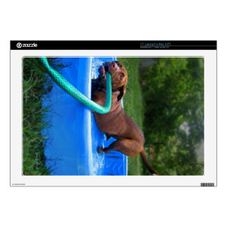 """Chocolate Lab Pit Puppy in Wading Pool 2 17"""" Laptop Decals"""
