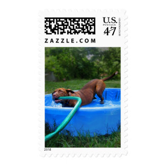 Chocolate Lab Pit Puppy in Wading Pool 2 Postage