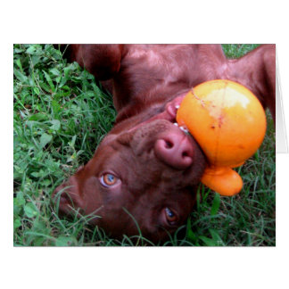 Chocolate Lab Pit Puppy Playing with Ball Card