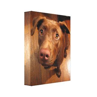 Chocolate Lab Pit Puppy Pleading Look Canvas Print