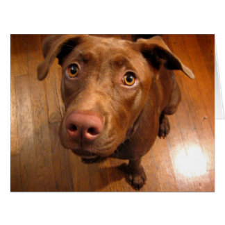 Chocolate Lab Pit Puppy Pleading Look Card