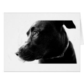 Chocolate Lab Pit Puppy Serene B&W Card