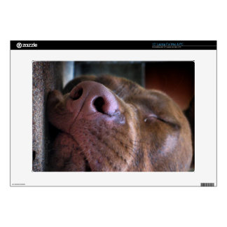 "Chocolate Lab Pit Puppy Sleeping Decal For 15"" Laptop"