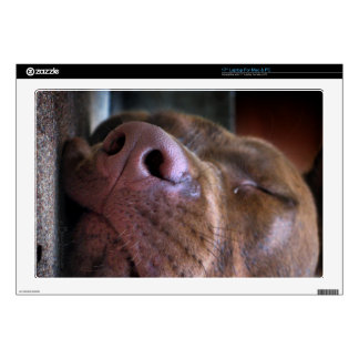 Chocolate Lab Pit Puppy Sleeping Skin For Laptop