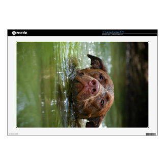 Chocolate Lab Pit Puppy Swimming 2 Laptop Decal