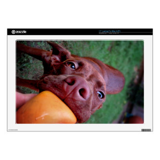"""Chocolate Lab Pit Puppy Tugging Ball Skins For 17"""" Laptops"""