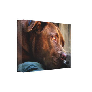 Chocolate Lab Pit Puppy Window Watching Canvas Print