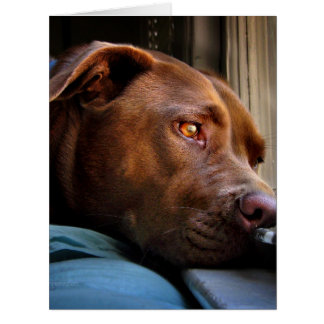 Chocolate Lab Pit Puppy Window Watching Card