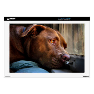 Chocolate Lab Pit Puppy Window Watching Skins For Laptops