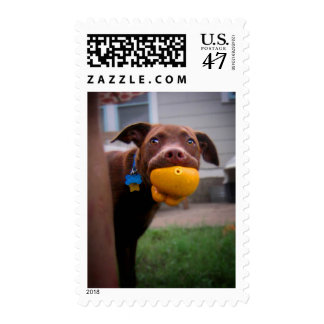 Chocolate Lab Pit Puppy with Ball Postage