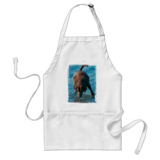 Chocolate Lab playing Adult Apron
