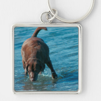 Chocolate Lab playing Keychain