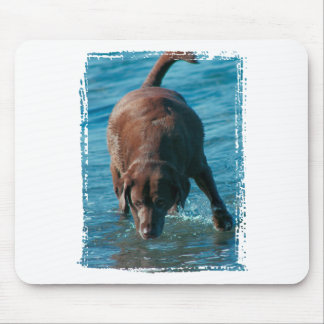 Chocolate Lab playing Mouse Pad