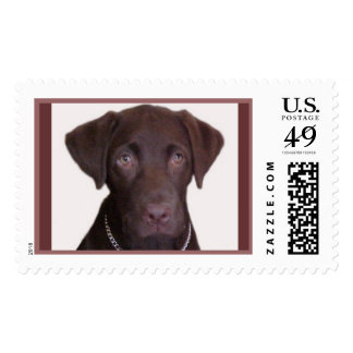 Chocolate Lab Postage Stamp