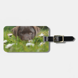 Chocolate Lab Pup Luggage Tag