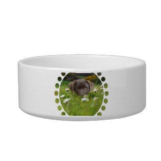 Chocolate Lab Pup Pet Bowl