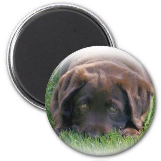 Chocolate Lab Puppy 2 Inch Round Magnet