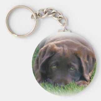 Chocolate Lab Puppy Basic Round Button Keychain