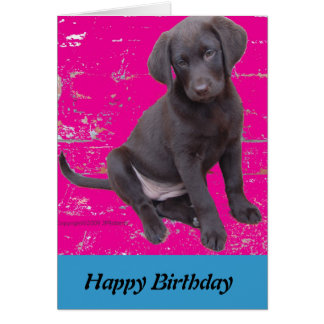 chocolate lab puppy birthday card