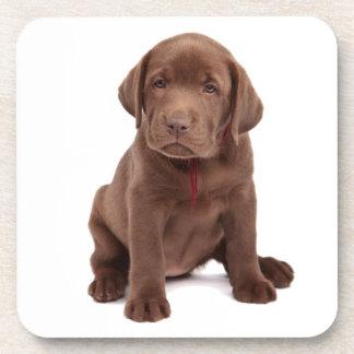 Chocolate Lab Puppy Drink Coaster