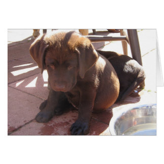 Chocolate Lab Puppy Greeting Cards