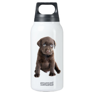 Chocolate Lab Puppy Insulated Water Bottle
