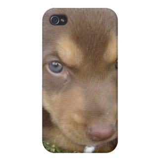 Chocolate Lab Puppy iPhone 4 Case