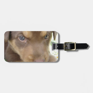 Chocolate Lab Puppy Luggage Tag