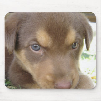 Chocolate Lab Puppy Mouse Pad