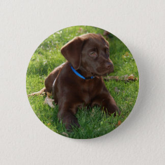 Chocolate Lab Puppy Pinback Button