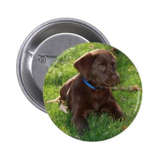 Chocolate Lab Puppy Pinback Button