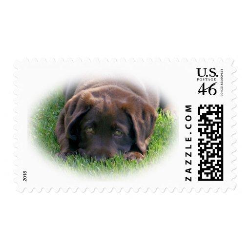 Chocolate Lab Puppy Postage