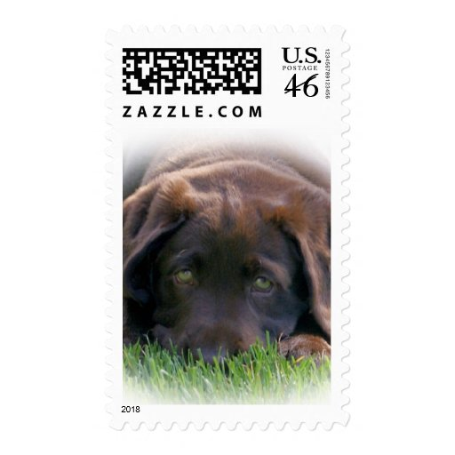 Chocolate Lab Puppy Postage Stamps