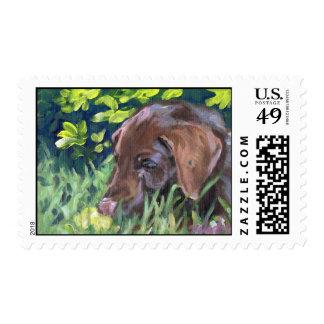 Chocolate Lab Puppy Stamp