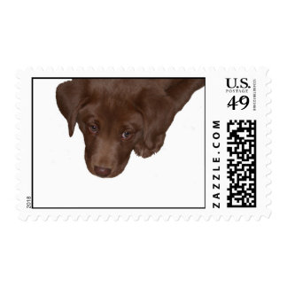 chocolate lab puppy stamps