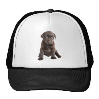 Chocolate Lab Puppy Trucker Hat