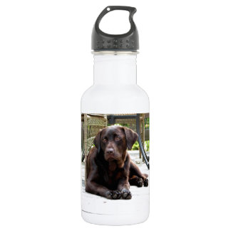 Chocolate Lab Stainless Steel Water Bottle
