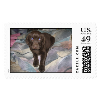 CHOCOLATE LAB STAMPS