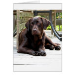 Chocolate Lab Stationery Note Card