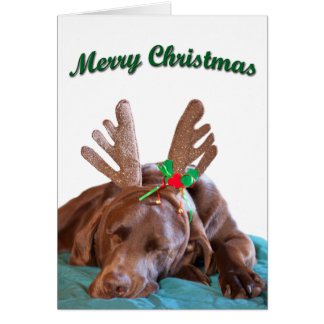 Chocolate Lab Wearing Antlers Photograph Card