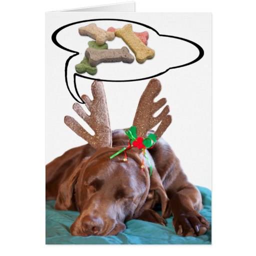 Chocolate Lab With Antlers And Treat Dreams Photog Cards