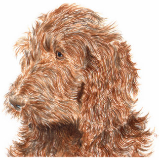 Chocolate Labradoodle #2 Sculpture Standing Photo Sculpture