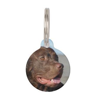 chocolate-labrador-1 placas de mascota