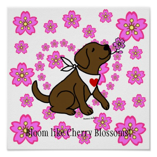 Chocolate Labrador and Cherry Blossoms Poster
