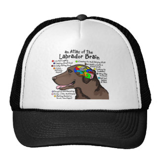 Chocolate Labrador Brain Atlas Hats