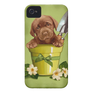 Chocolate Labrador iPhone 4 Case-Mate Case