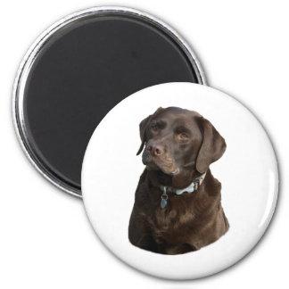 Chocolate Labrador dog photo portrait 2 Inch Round Magnet