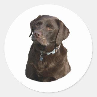 Chocolate Labrador dog photo portrait Classic Round Sticker