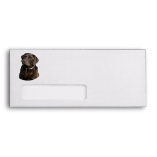 Chocolate Labrador dog photo portrait Envelope